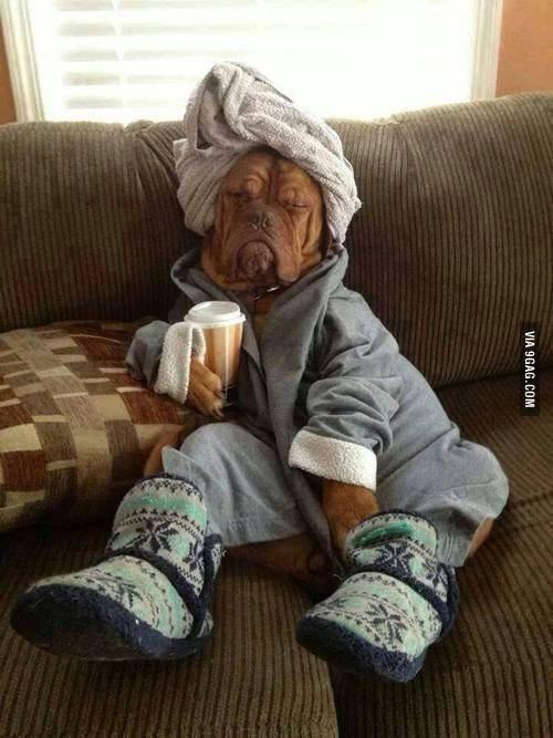 dog-in-pajama-funny